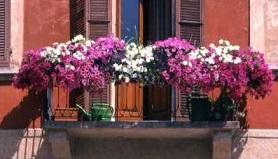 XVI rassegna Balconi ed angoli fioriti