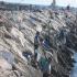 Campionati italiani di canna da riva