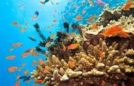 Lezione culturale di biologia marina sugli ecosistemi costieri