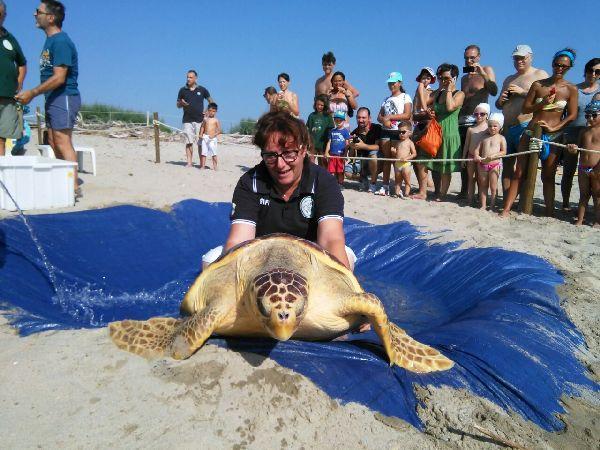 Alcune fasi della liberazione delle tartarughe