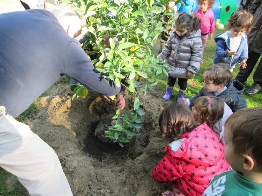 La Festa dell'Albero 2015 nelle scuole cittadine
