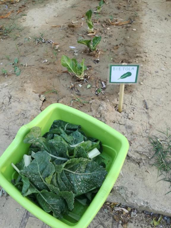 I primii frutti dell'orto dei nonni