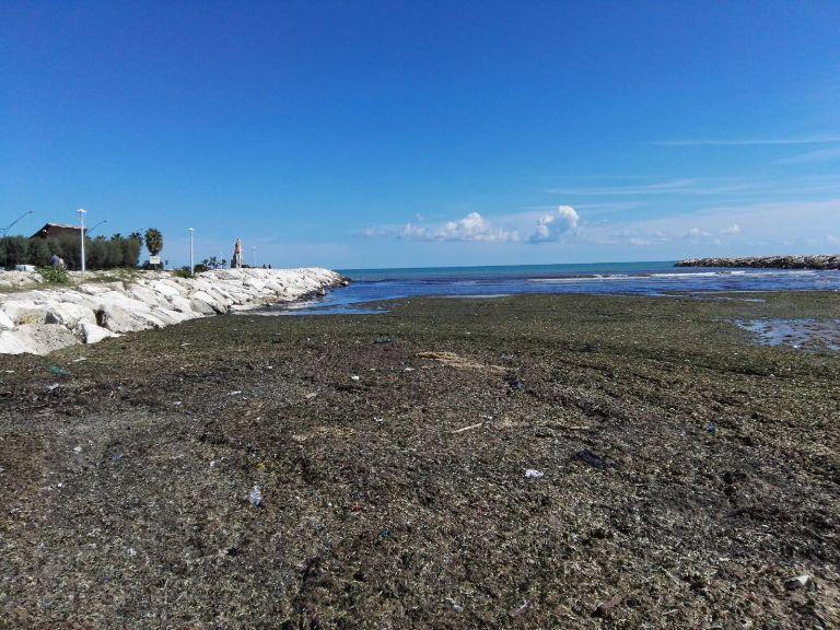 Le alghe alla foce dell'Albula