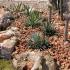 08 - Giardino arido