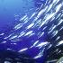 Mercato Ittico, scendono i diritti d'asta sul pesce bianco