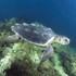 Dopo le cure, si libera una tartaruga marina