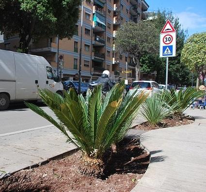 Nuove piante per le aiuole di viale De Gasperi