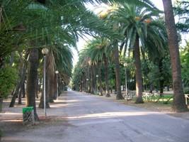 La Pineta in Via Padre Olindo Pasqualetti