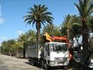 In viale De Gasperi si potano le piante e si portano via le bici abbandonate