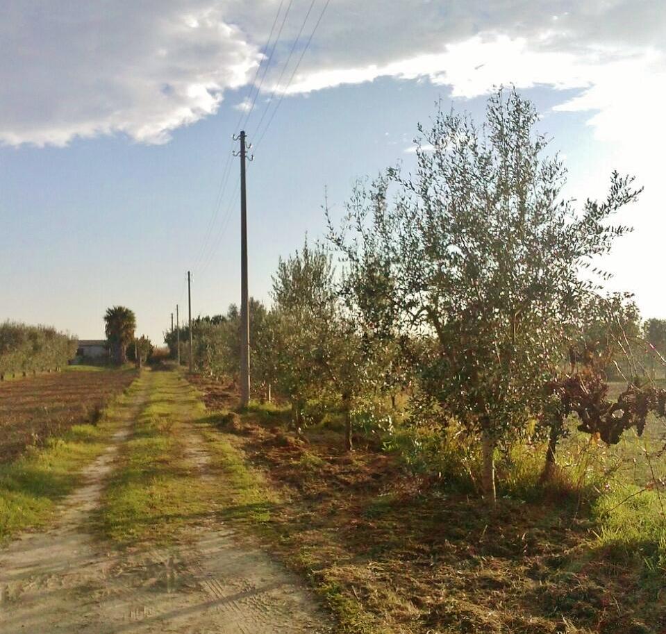 Sentina, concluso il progetto pilota sul miglioramento del paesaggio agricolo