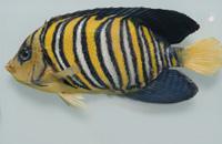 """The """"Augusto Capriotti"""" Fish Museum"""